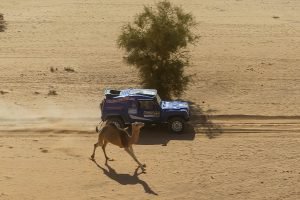car vs camel at the Africa Race
